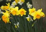 Spring garden shot